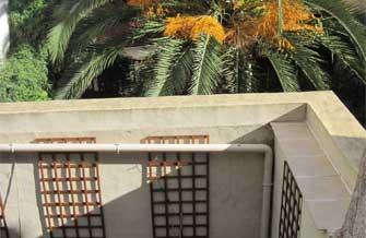 Maison Jaune - Vue de la terrasse avec le palmier du voisin